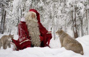 Babbo Natale e due esemplari di Lince sulla neve